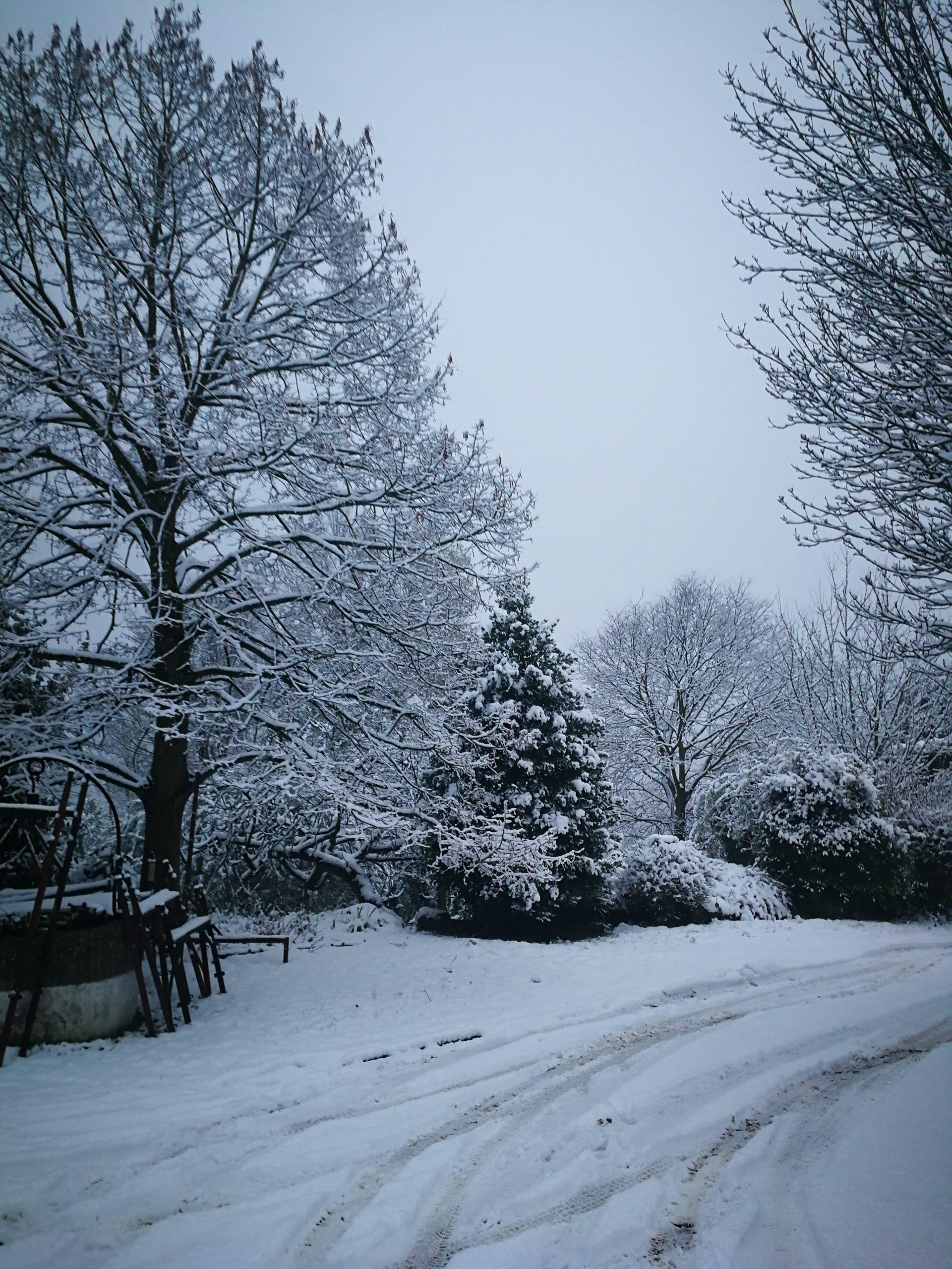 Evviva la neve! 8
