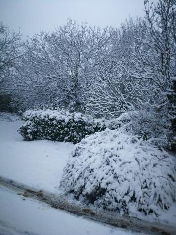Evviva la neve! 1